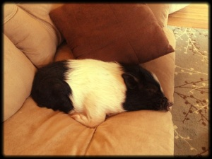 pigcouch