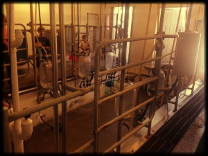 Milk Parlor