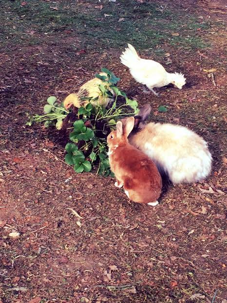 bunnyfeast