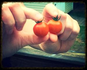 tomatocherry