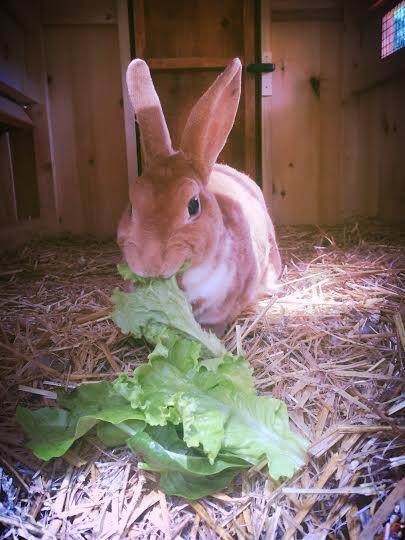 rabbitqueen